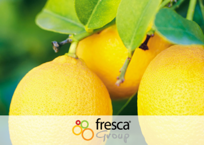 Banking review for Fresca Group